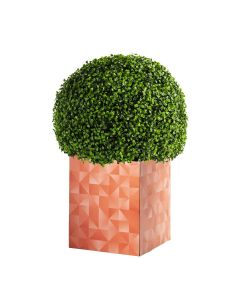 Boxwood Ball Logo