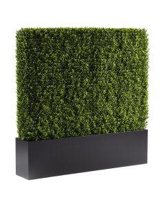 Boxwood Hedge, 4'
