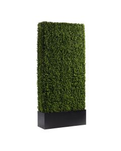 Boxwood Hedge, 7'