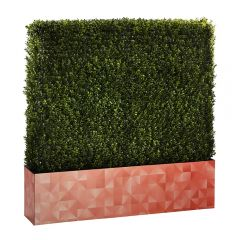 Boxwood Hedge 4' Logo