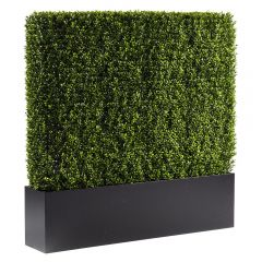 Boxwood Hedge, 4'