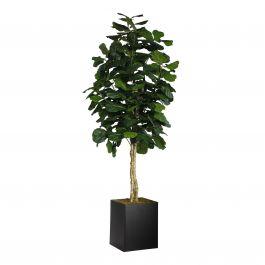 Fiddle Leaf Tree, 8'